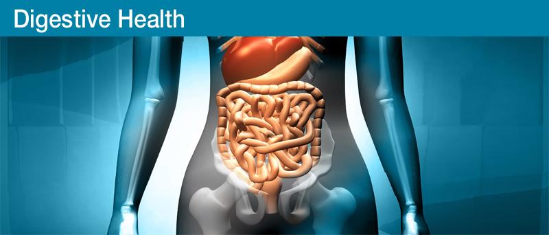 Digestive_Health
